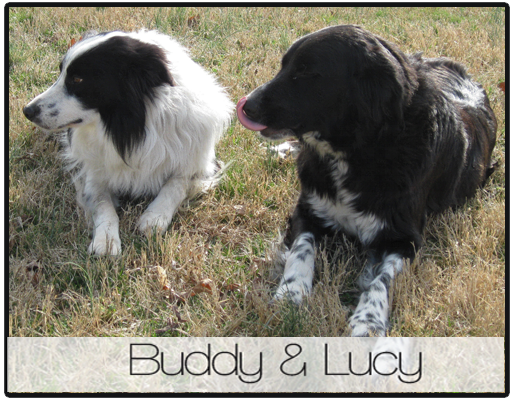 Buddy Lucy 2012 profile